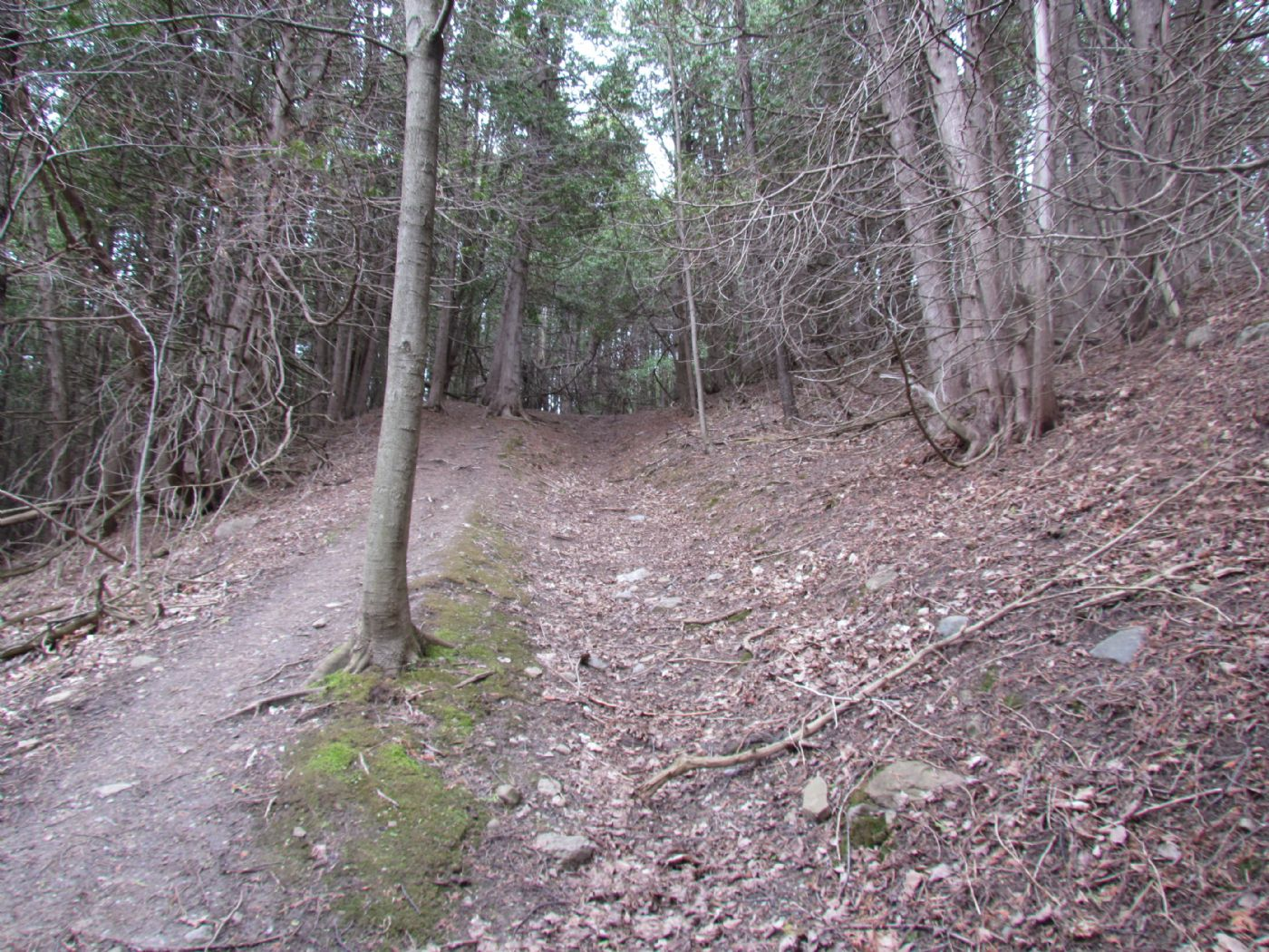 50 Acres Forks Of The Credit Equestrian Properties Real