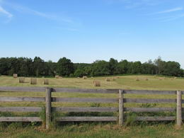 Multiple Hay Fields - Country homes for sale and luxury real estate including horse farms and property in the Caledon and King City areas near Toronto